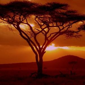 The Night Drive, Northern Uganda