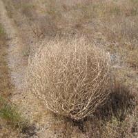 The Texas Tumbleweed Christmas Tree