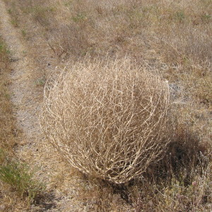 The Texas Tumbleweed Christmas Tree